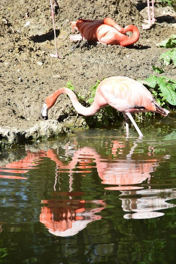 02_Pelikan-Fotosafari-Tierpark-Hellabrunn-Zoo-Muenchen
