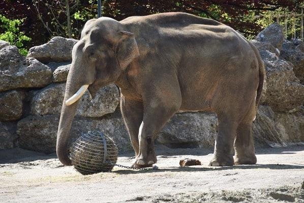 03_Elefant-Fotosafari-Tierpark-Hellabrunn-Zoo-Muenchen