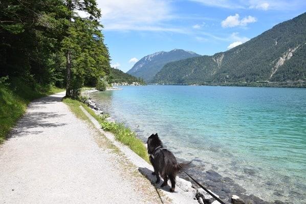 04_Wanderung-mit-Hund-Ufer-Achensee-Tirol-Oesterreich