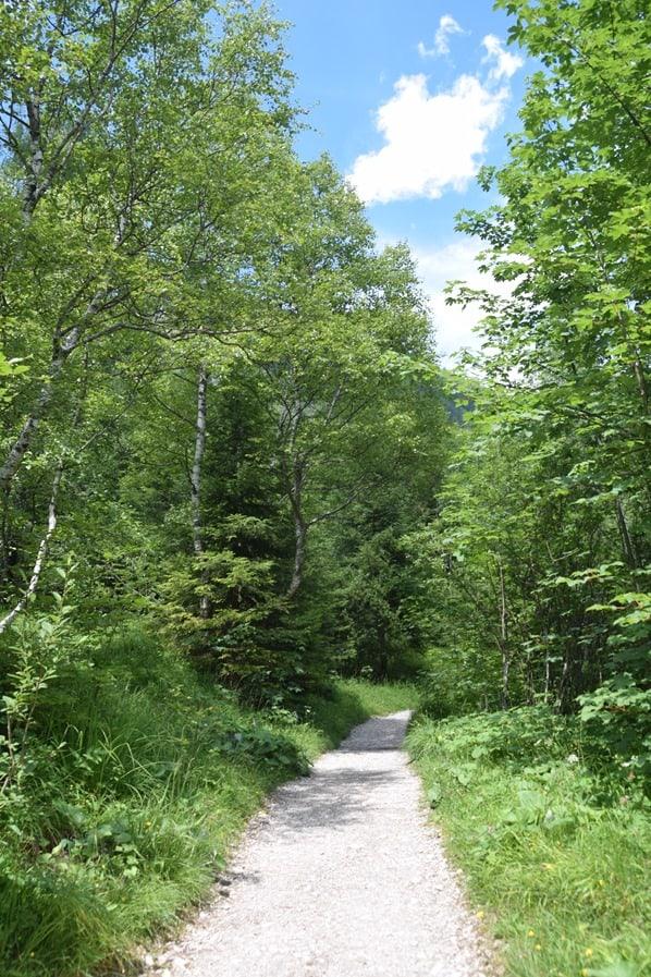 05_Wanderung-Wald-Achensee-Tirol-Oesterreich