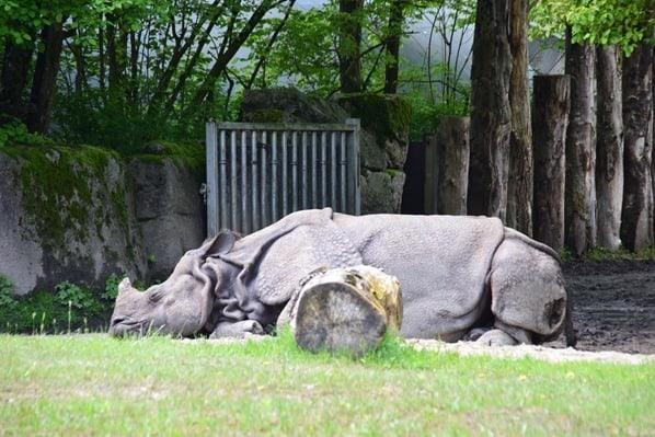 22_Nashorn-Fotosafari-Tierpark-Hellabrunn-Zoo-Muenchen