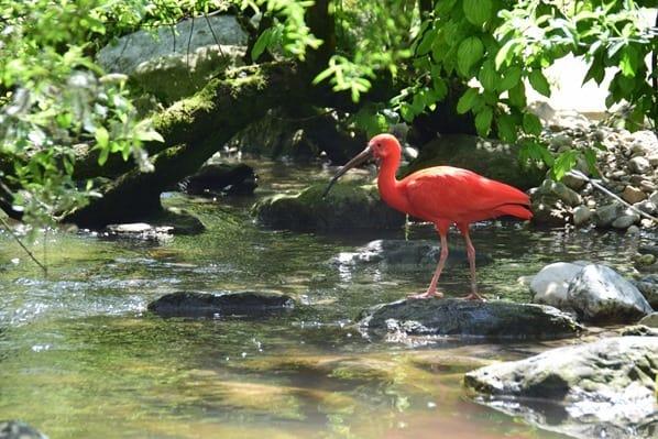 25_Roter-Sichler-Fotosafari-Tierpark-Hellabrunn-Zoo-Muenchen