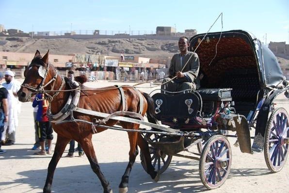 Pferd-Pferdekutsche-Edfu-Aegypten