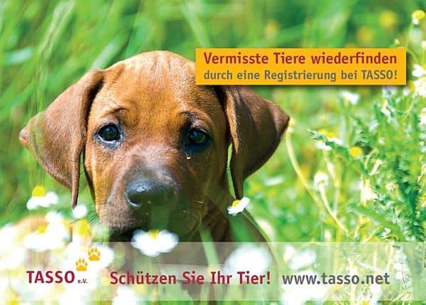 Tasso-Haustiere-wieder-finden