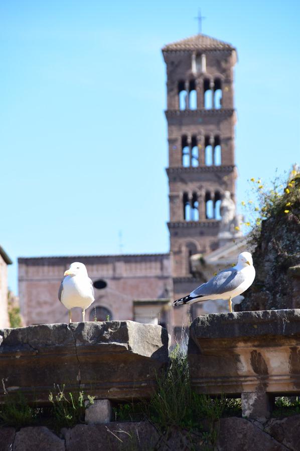30_Moewen-im-Forum-Romanum-Foro-Romano-Citytrip-Rom-Italien