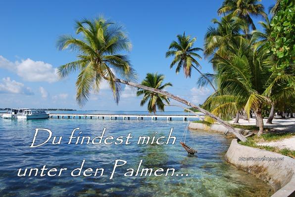 21_Du-findest-mich-unter-den-Palmen