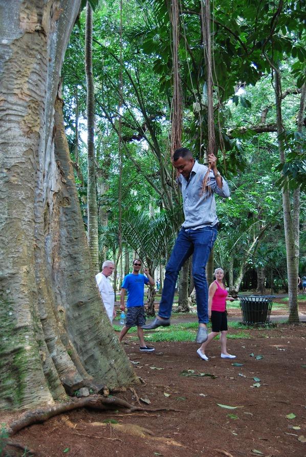 07_Liane-Botanischer-Garten-Pamplemousses-Mauritius