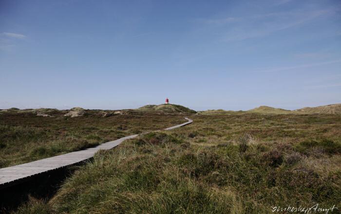 Amrum Dünen Nordsee Nordfriesland