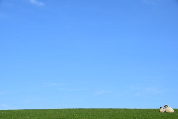 02_Blauer-Himmel-Deich-Schafe-Friedrichskoog-Nordsee-Nordfriesland-Schleswig-Holstein-Deutschland
