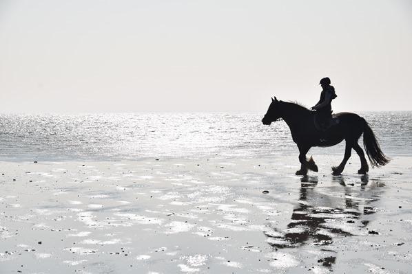 19_Pferd-Reiten-am-Meer-Strand-St-Peter-Ording-Nordsee-Nordfriesland-Schleswig-Holstein-Deutschland
