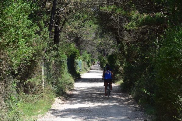 13_Wanderweg-Radweg-Richtung-Bibione-Venetien-Adria-Italien
