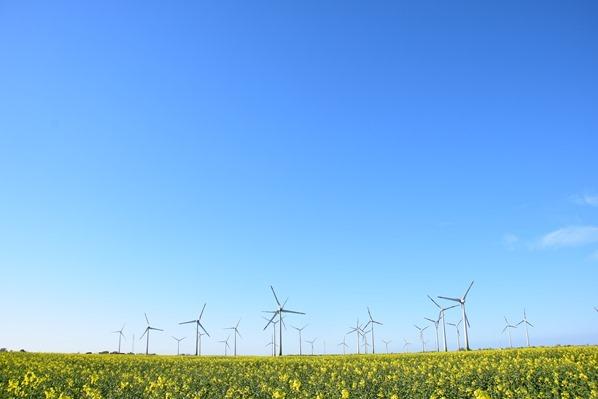 27_Windpark-Windraeder-Rapsfeld-Blumen-Dithmarschen-Nordsee