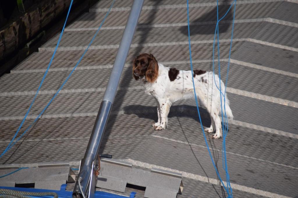 arosa flusskreuzfahrt rhein schleuse lastkahn frachtschiff hund a-rosa aqua