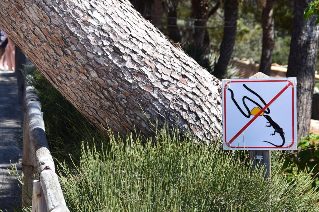 Sa Dragonera Dracheninsel Mallorca Naturschutzgebiet bitte nicht füttern Spanien