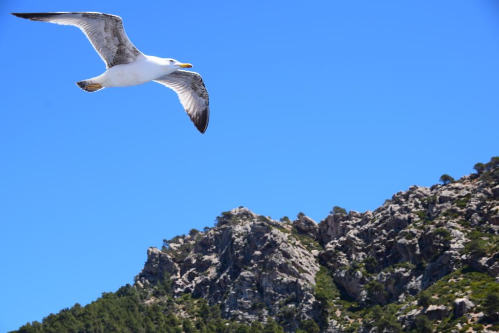Sa Dragonera Dracheninsel Mallorca Möwe blauer Himmel Balearen Spanien