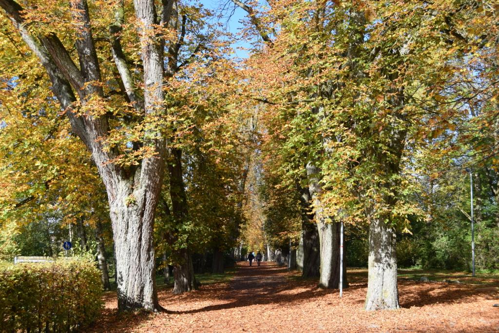 Herbst Rundweg Bad Waldsee Baden Württemberg Deutschland