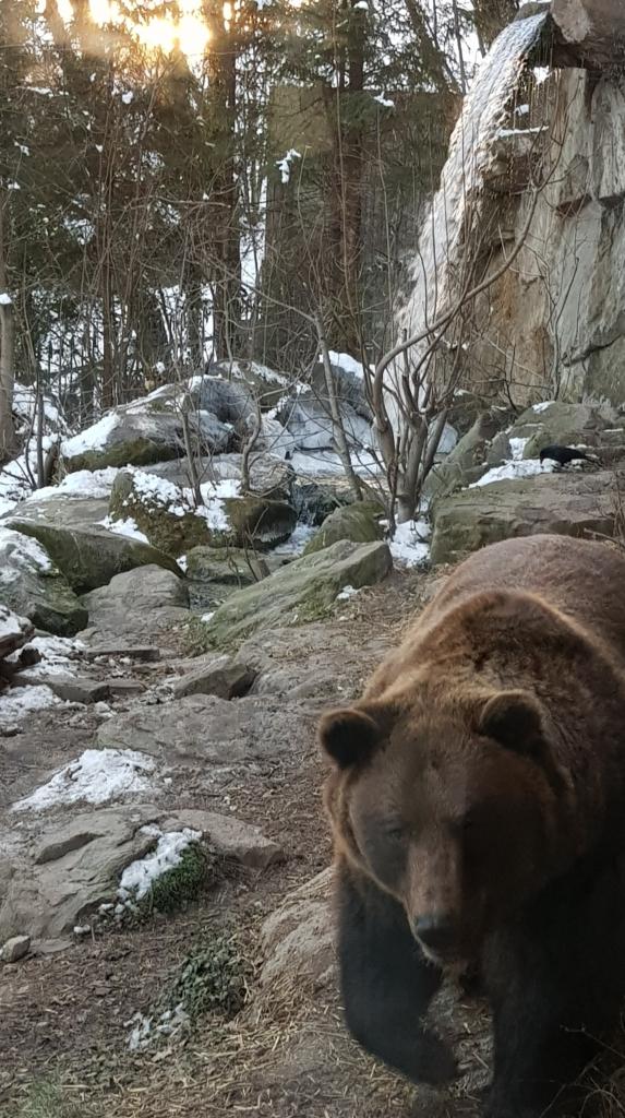 Alpenzoo Innsbruck Braunbär Bär Tirol Österreich