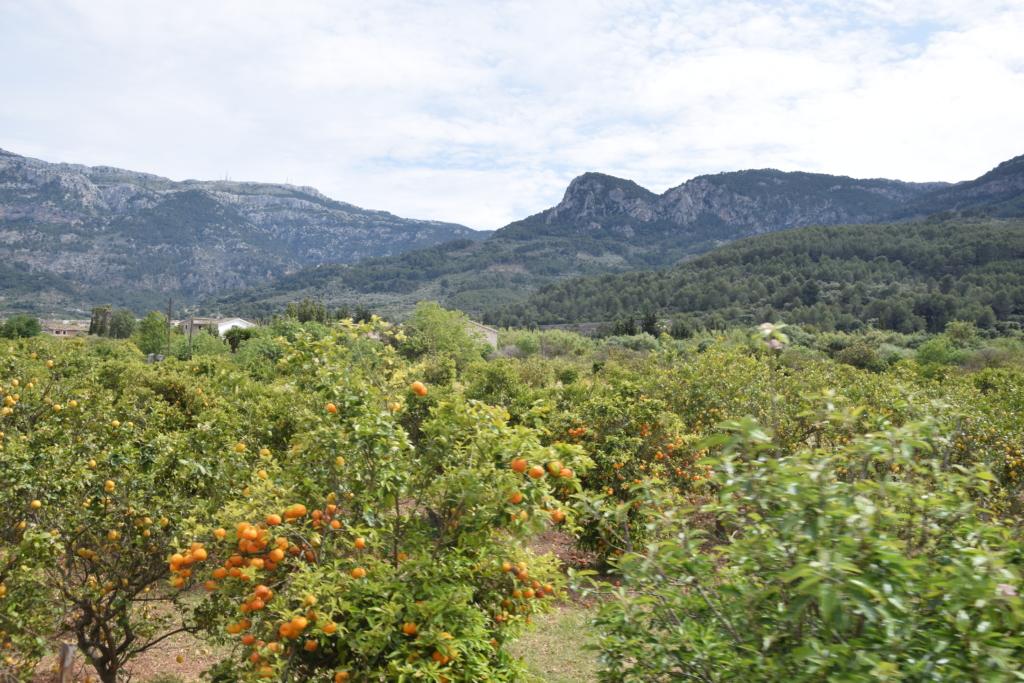 23 fahrt mit tranvia strassenbahn landschaft soller mallorca balearen spanien
