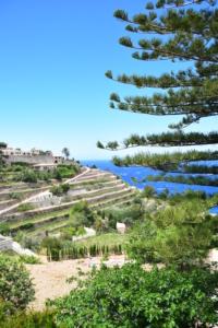 12 westkueste mallorca banyalbufar terrassen spanien