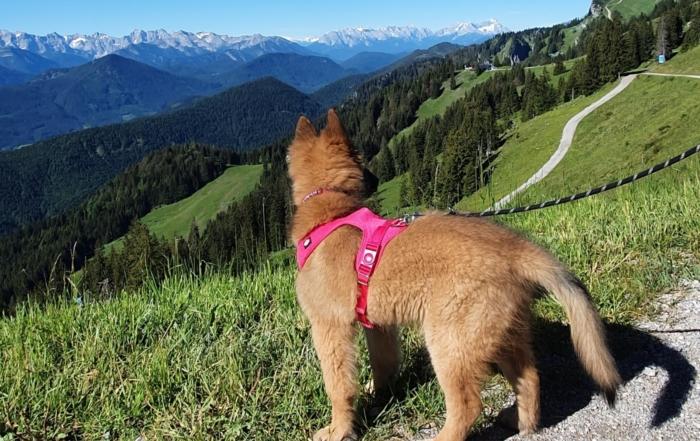 00 ferien corona ausflugstipps kinder hund oberbayern