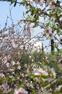 mandelblüte cartagena spanien aida familien kreuzfahrt