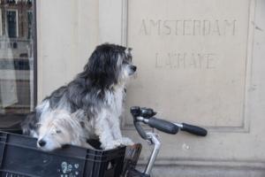 hunde im korb amsterdam sightseeing holland niederlande