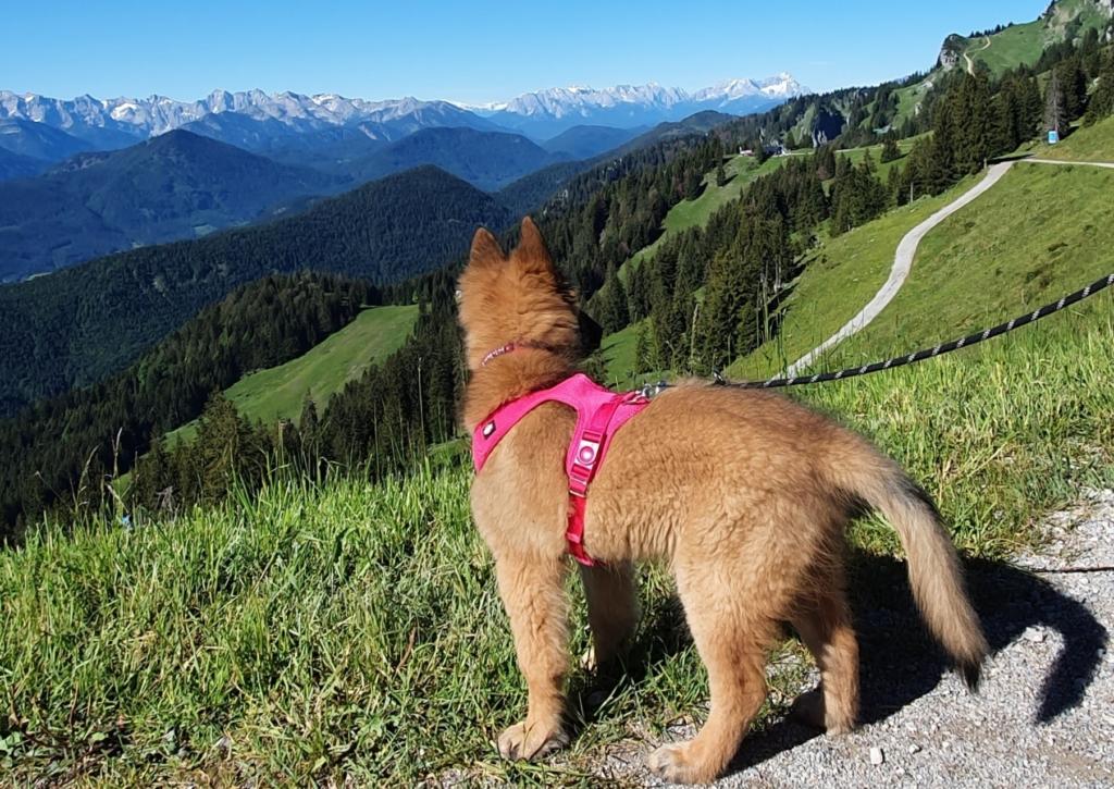 corona ausflug alpen bergwanderung mit hund