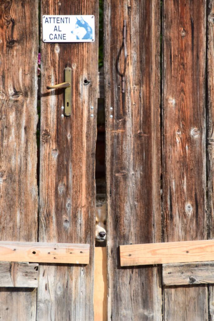 Neugieriger Hund Ausflug Umgebung Grado Friaul-Julisch Venetien Italien
