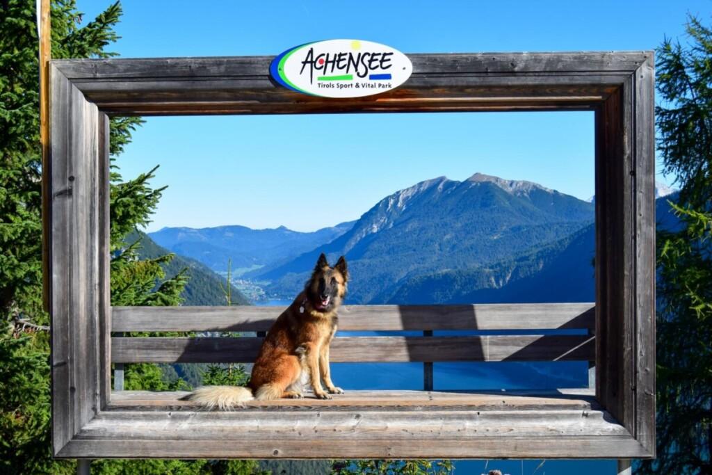 Hund Fotospot Zwölferkopf Karwendel Achensee Pertisau Tirol Österreich