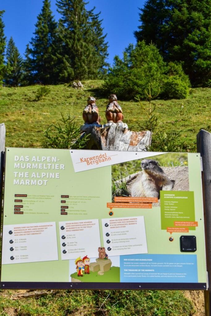 Alpen Murmeltiere Erlebnispfad Rundwanderweg Karwendel Achensee wandern Pertisau Tirol Österreich