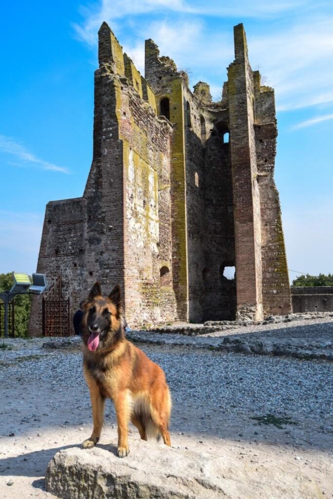 Hund Castello Scaligero Scaligerburg Valeggio sul Mincio Gardasee Venetien Italien