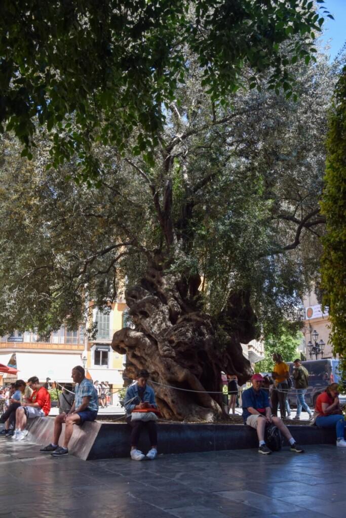 31 Placa del Cort Palma de Mallorca Sehenswuerdigkeiten Balearen Spanien